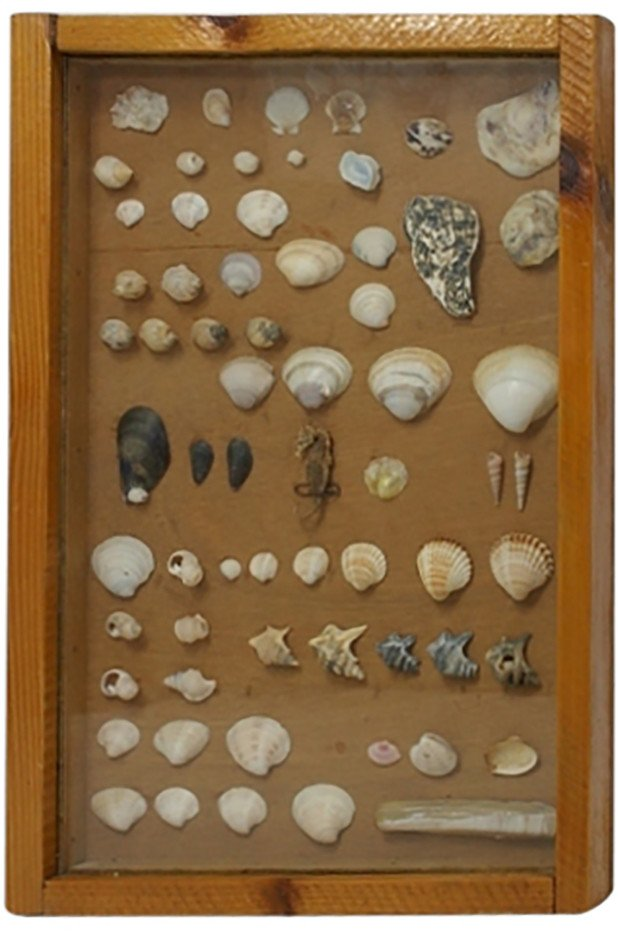 Showcase with Shells, 1950s