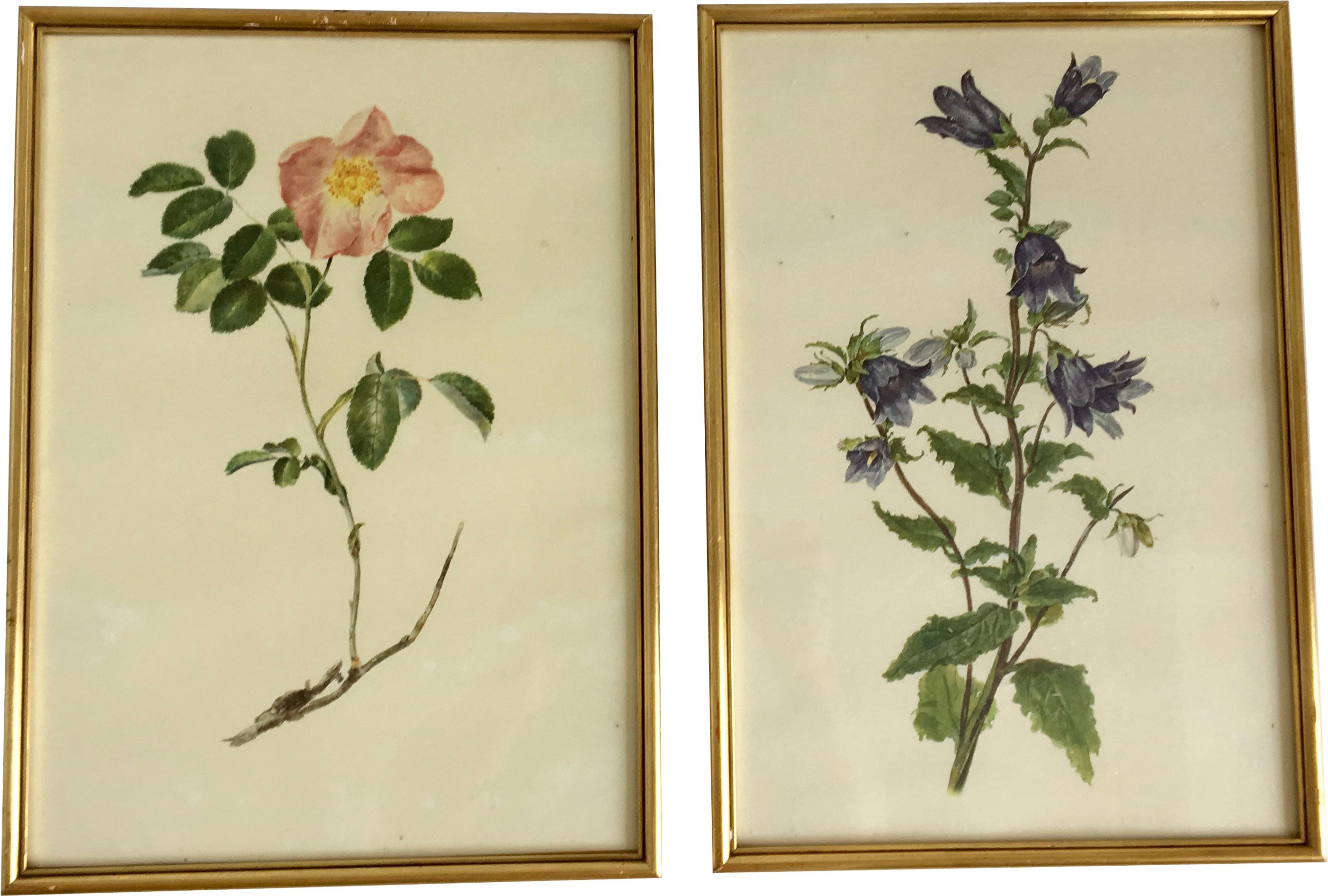 Pair of Botanical Graphics, 1960s