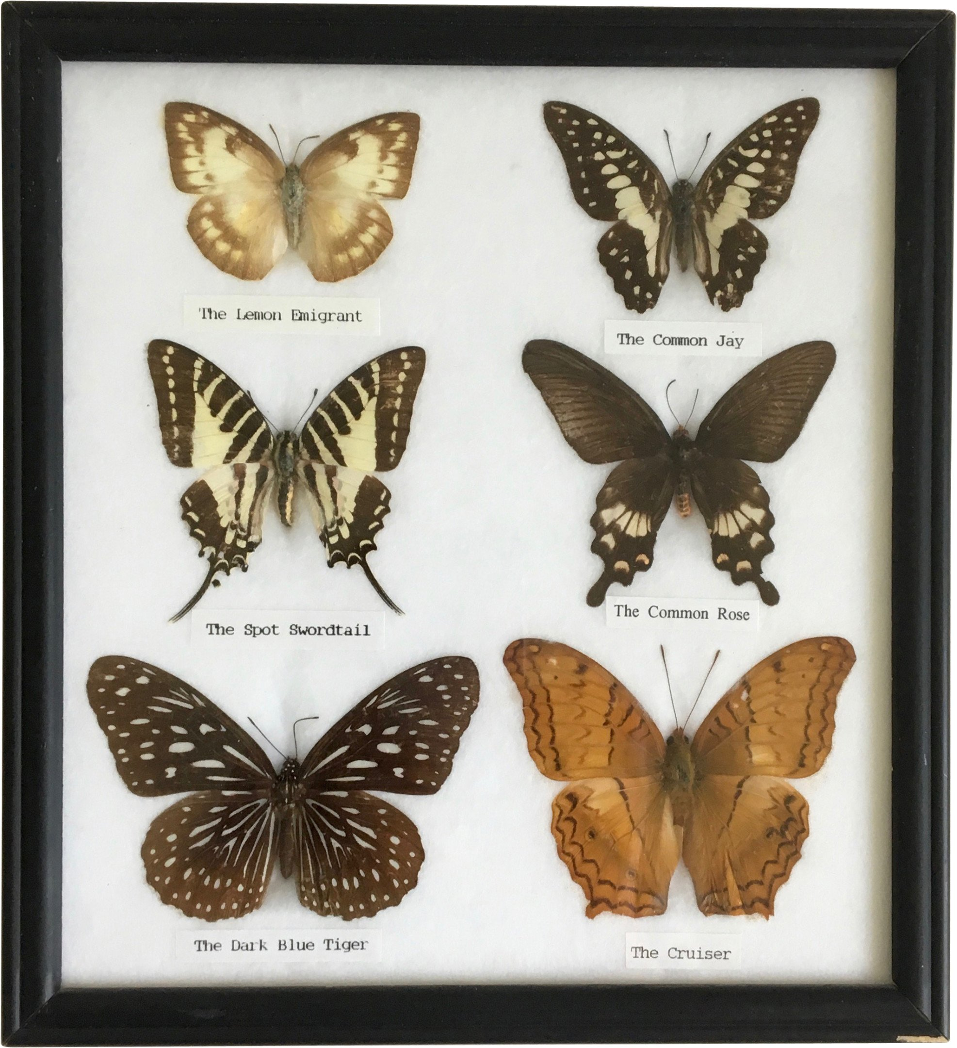 Collection of Butterflies, 1970s