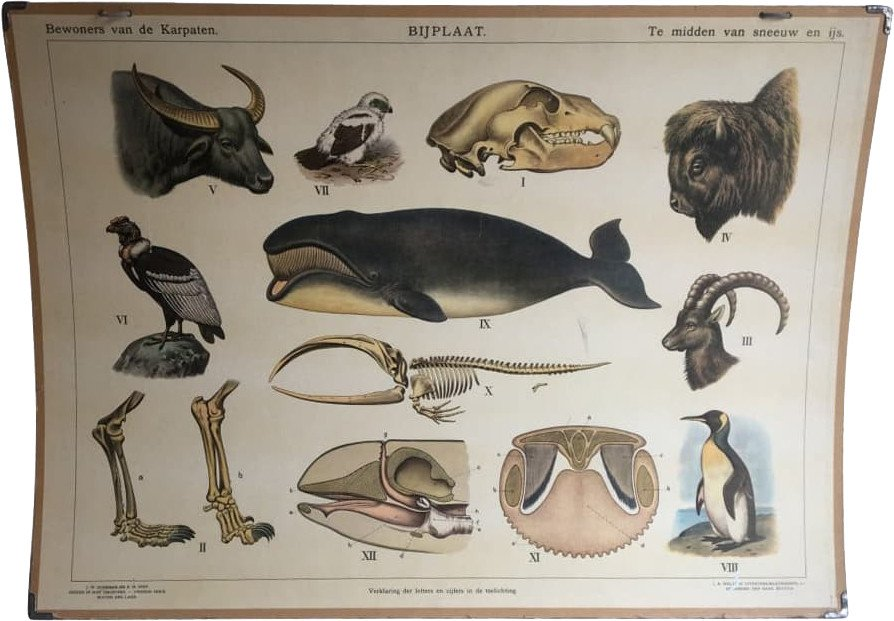 Scientific Chart, 1930s