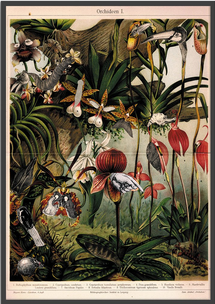 Plakat Orchidee 50x70, aut. J. Stączek, Wall-being