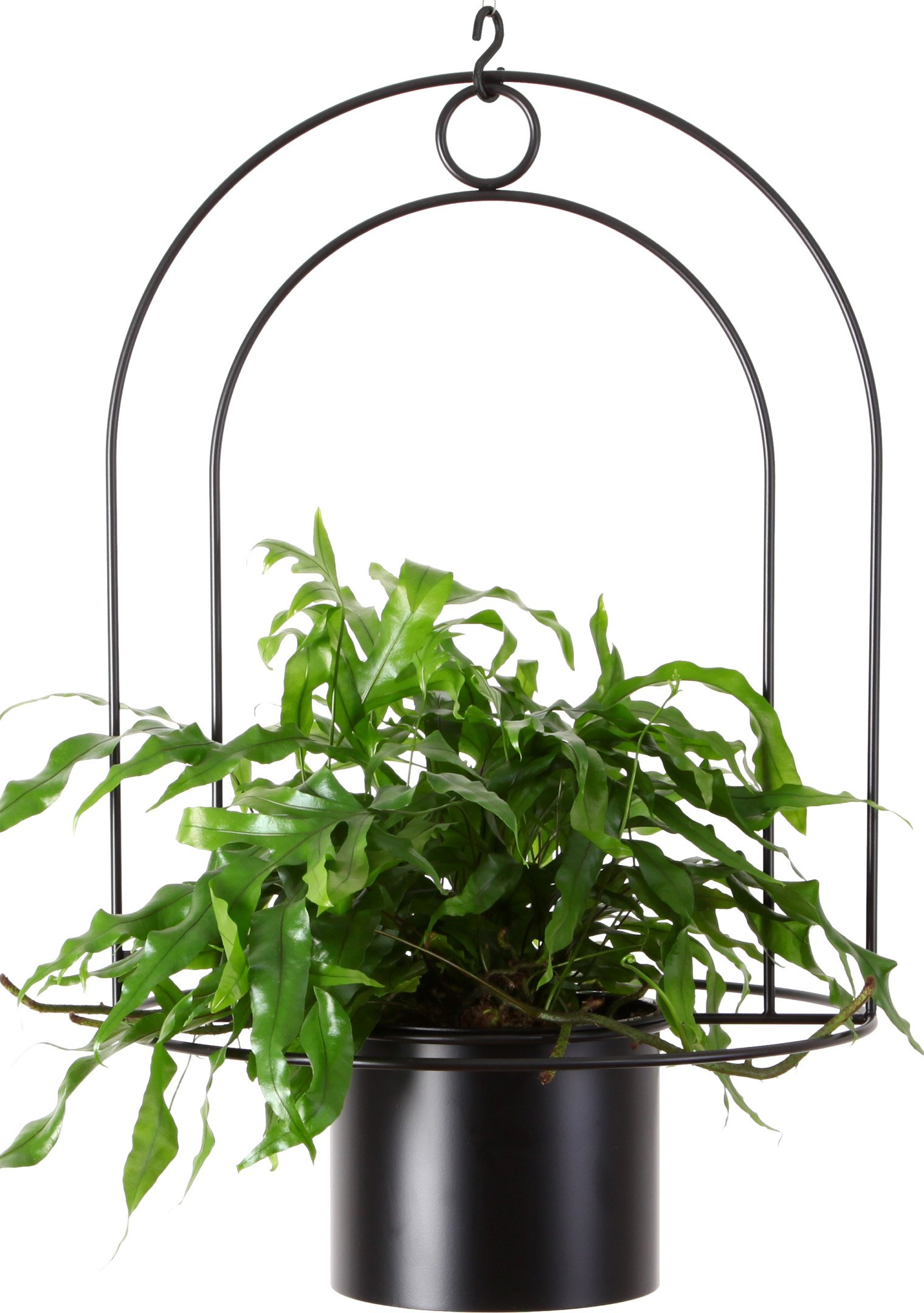Dou Ceiling Plant Hanger With a Pot Black, Bujnie