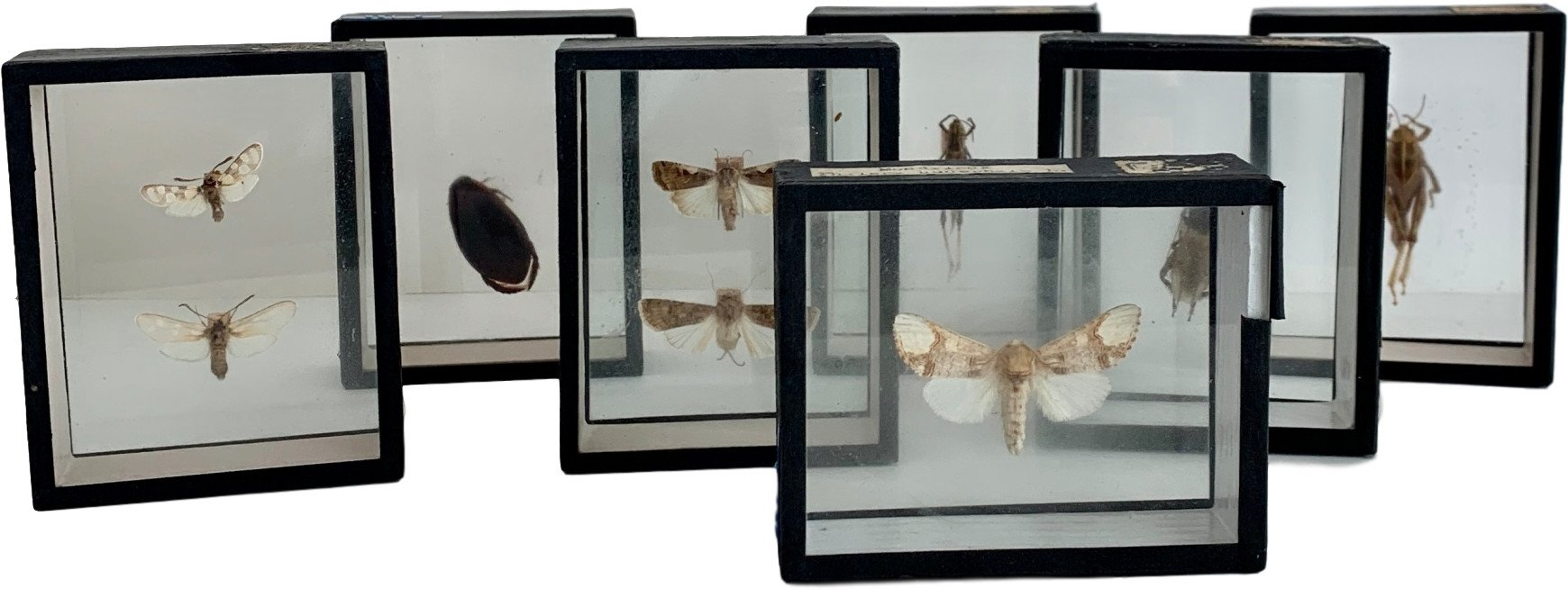 Entomological Cabinet, Austria, 1950s